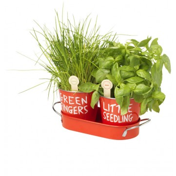 Grow your own herbs11240100