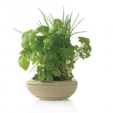 Herba herb gardenP269.259