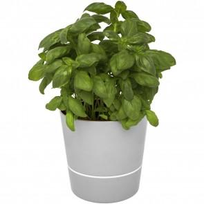 Herbs single kitchen pot